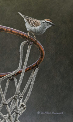 """""""One on One - Chipping Sparrow,"""" by W. Allan Hancock 7 1/2 x 12 1/2 - acrylic $1125 Unframed"""