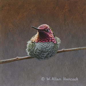 "SOLD ""Striking Poses - Anna's Hummingbird 4,"" by W. Allan Hancock 5 x 5 - acrylic $500 Unframed"