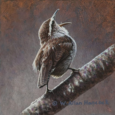 "SOLD ""Bewick's Wren Study 1,"" by W. Allan Hancock 5 x 5 (on 6 x 6 panel) - acrylic $500 Unframed"