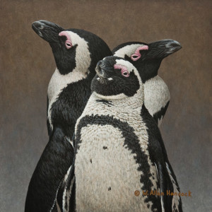 "SOLD ""Me, Myself and I - African Penguins,"" by W. Allan Hancock 10 x 10 - acrylic $1180 Unframed"