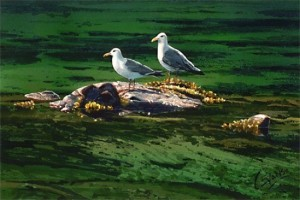 """""""Gulls in the Sun,"""" by Carol Evans 7 x 10 1/2 - Giclée on paper (edition size of 295) - $110 Unframed"""