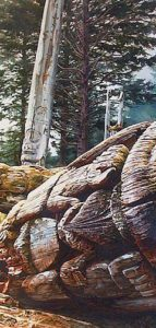 "SOLD ""Cedar Story Tellers"" by Carol Evans 14 x 28 – watercolour $8000 Framed"