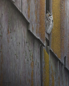 "SOLD ""The North Wall - Great Horned Owl,"" by W. Allan Hancock 24 x 30 - acrylic $3850 Unframed"