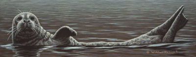 """Lazing About - Harbour Seal,"" by W. Allan Hancock 5 x 17 - acrylic $1015 Unframed"