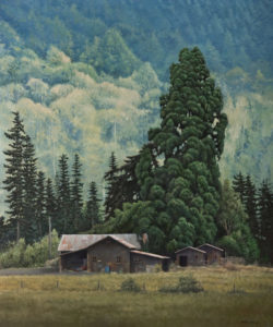 """""""Majestic Giant (Redwood),"""" by Keith Hiscock 30 x 36 - oil $6800 Unframed"""