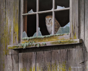 "SOLD ""Casing the Place - Barn Owl,"" by W. Allan Hancock 16 x 20 - acrylic $2365 Unframed"