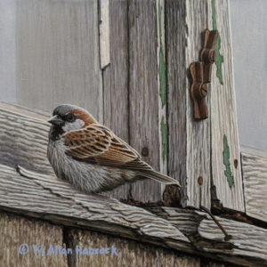 """SOLD """"Time Frame - House Sparrow,"""" by W. Allan Hancock 6 x 6 - acrylic $550 Unframed $735 in show frame"""
