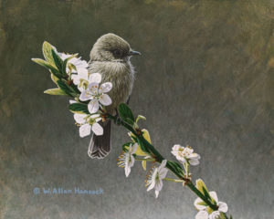 "SOLD ""While Waiting - Pacific-slope Flycatcher,"" by W. Allan Hancock 8 x 10 – acrylic $975 Unframed"