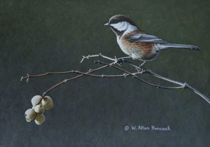 "SOLD ""From the Top - Chestnut-backed Chickadee,"" by W. Allan Hancock 7 x 10 - acrylic $875 Unframed"