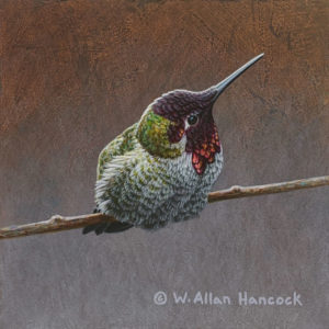 "SOLD ""Striking Poses - Anna's Hummingbird 1,"" by W. Allan Hancock 5 x 5 - acrylic $500 Unframed"