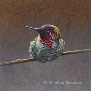 "SOLD ""Striking Poses - Anna's Hummingbird 2,"" by W. Allan Hancock 5 x 5 - acrylic $500 Unframed"
