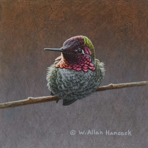 "SOLD ""Striking Poses - Anna's Hummingbird 3,"" by W. Allan Hancock 5 x 5 - acrylic $500 Unframed"