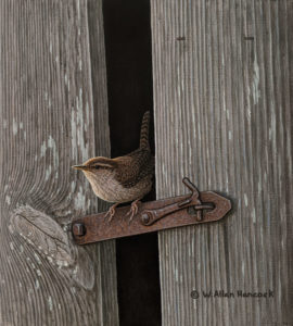 "SOLD ""Home Security - House Wren,"" by W. Allan Hancock 9 x 10 - acrylic $1080 Unframed"
